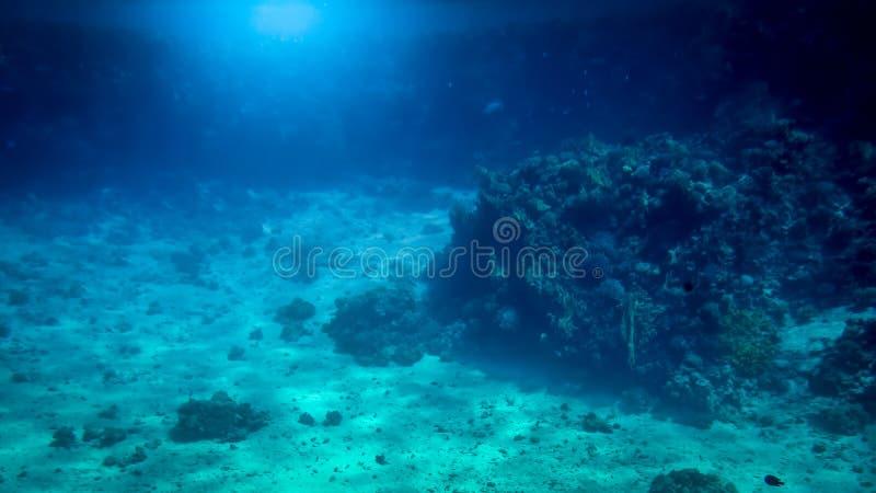 Изумительная подводная съемка песочного дна моря с расти красочные коралловые рифы и плавать рыбы стоковое изображение rf