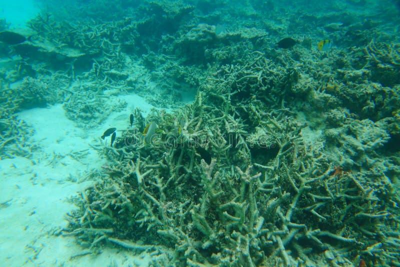 Изумительное подводное мировое обозрение Открытое море, белый песок и мертвые коралловые рифы Индийского океана snorkeling стоковые фотографии rf