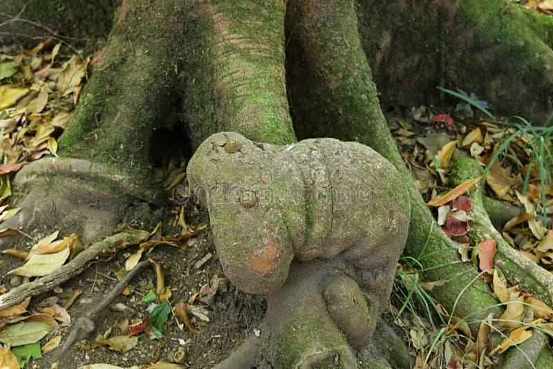 Изумительные корни дерева выглядеть как червь на следе природы лотка Kew Mae, природном парке Doi Inthanon, Чиангмае, Таиланде стоковая фотография rf