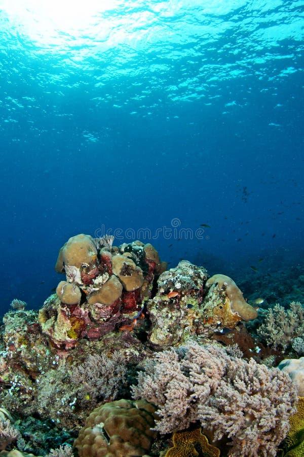 изумительные пейзажи подводные стоковая фотография rf