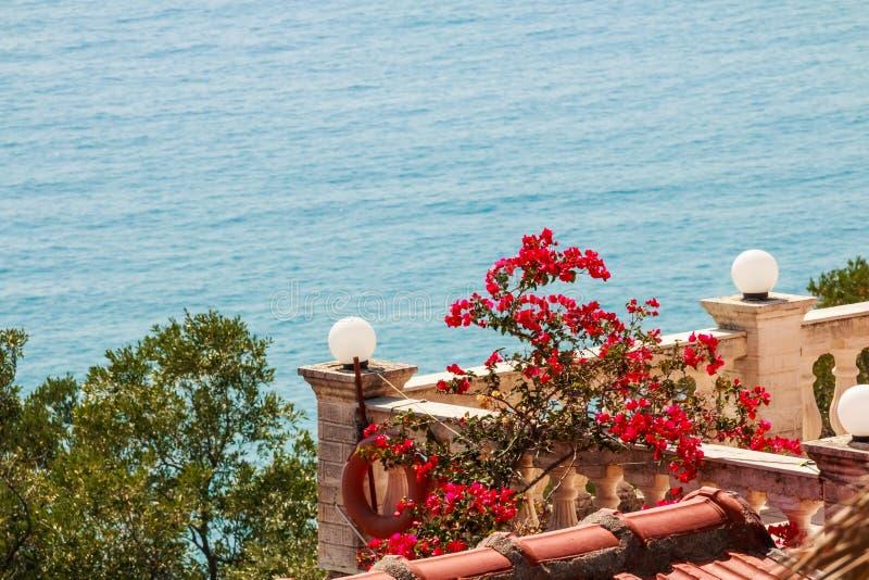 Изумительный взгляд к цветкам моря и бугинвилии Среднеземноморской ландшафт Олеандр, красочные цветки около патио, вида на море стоковые изображения