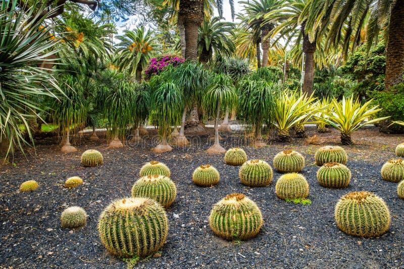Изумительный взгляд района парка кактуса в парке Garcia Sanabria Locat стоковые фотографии rf