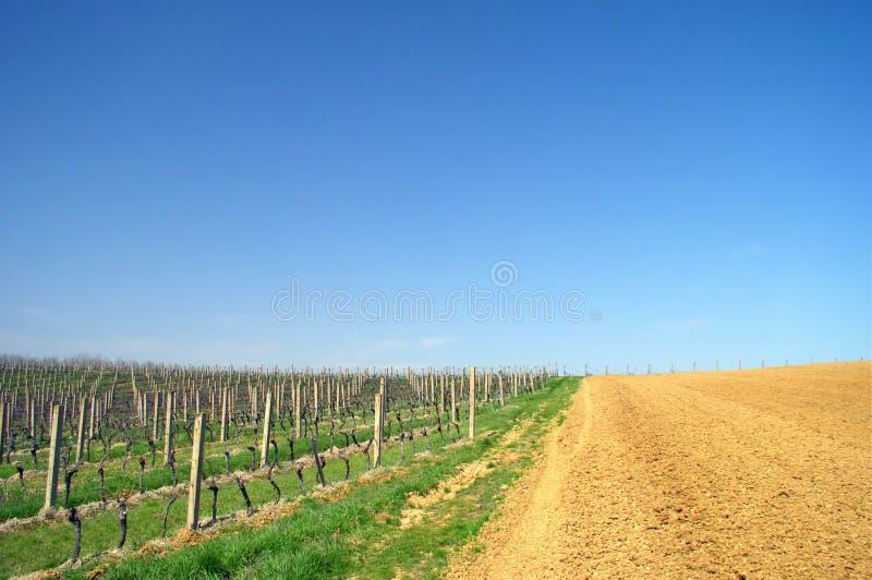 изумительный виноградник стоковые изображения rf