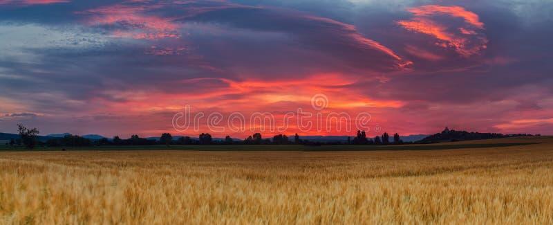 Изумительный восход солнца над полем хлопьев стоковая фотография