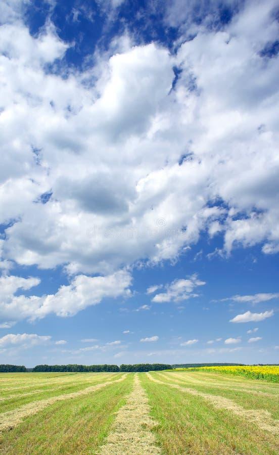 изумительным накошенная полем пшеница солнцецветов стоковые изображения