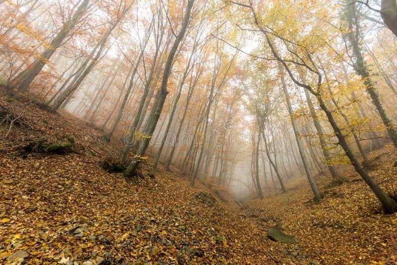 Изумительная панорама осени с туманом в желтом лесе, горой Vitosha, Болгарией стоковое фото