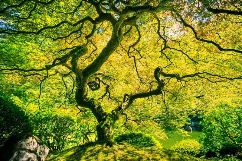 Изумительное зеленое дерево стоковые изображения rf