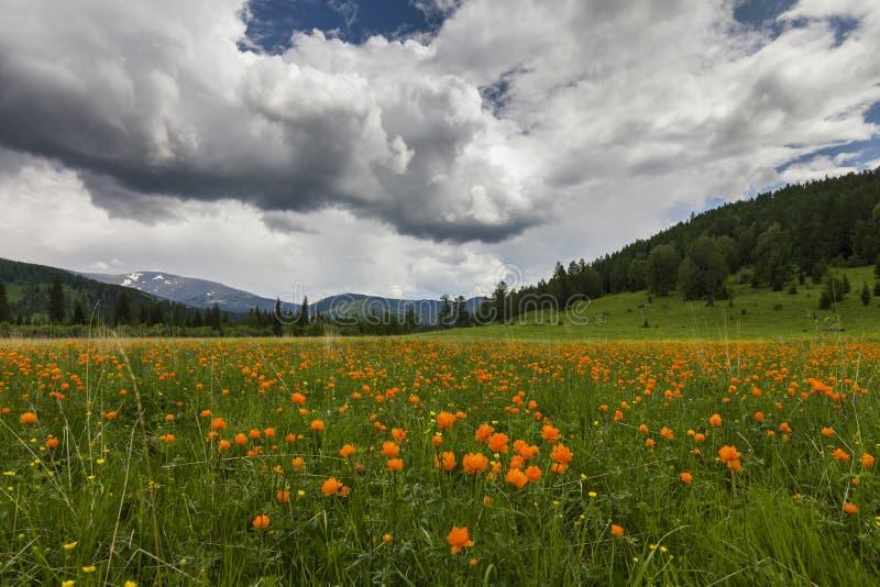 Изумительные взгляды цветистого луга стоковая фотография rf