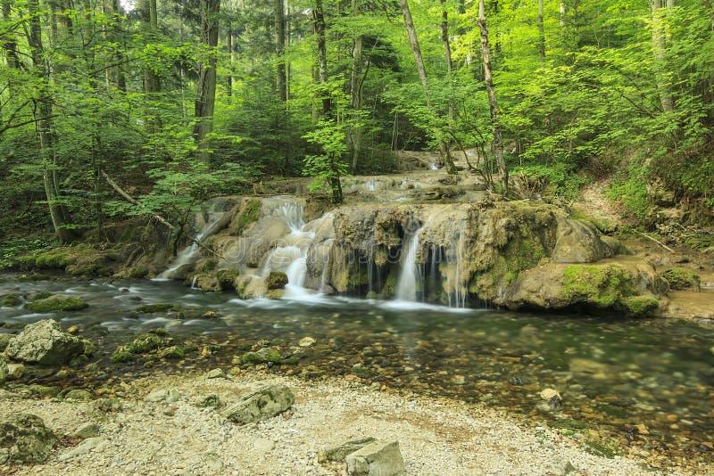 Изумительные каскады и ясное река в лесе, национальном парке Beusnita, Румынии стоковая фотография rf