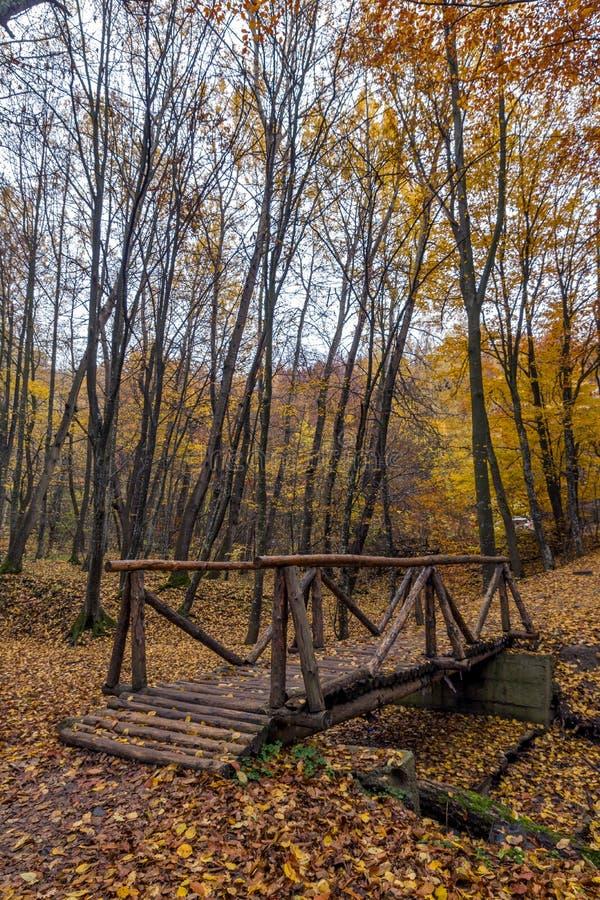 Изумительный ландшафт с деревьями деревянного моста и осени, горой Vitosha, Болгарией стоковое фото
