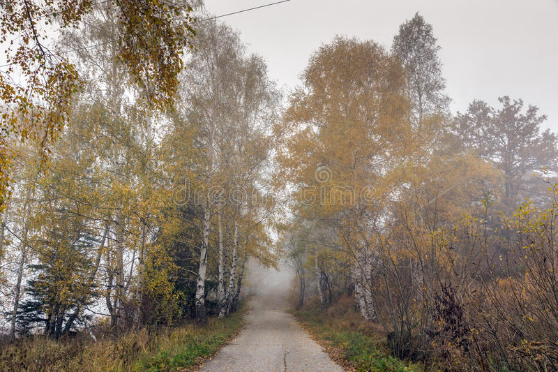 Изумительный взгляд осени с березами на всем пути, гора Vitosha, Болгария стоковое изображение