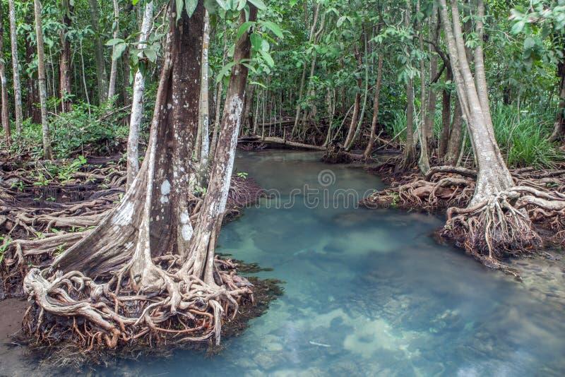 Изумительный кристалл - ясный изумрудный канал с лесом Thapom мангровы стоковое фото rf