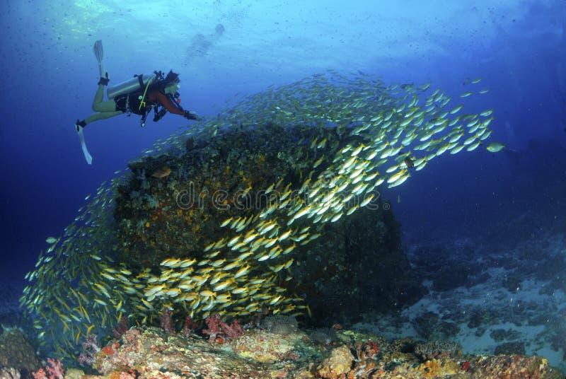 Изумительный молодой водолаз акваланга с рыбами подводными стоковое изображение rf