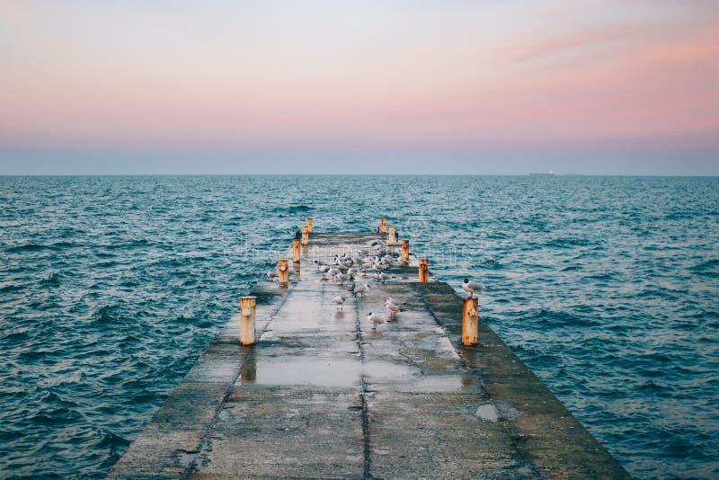 Изумляя взгляд на пристани моря конкретной со стадом чайок стоковые фото