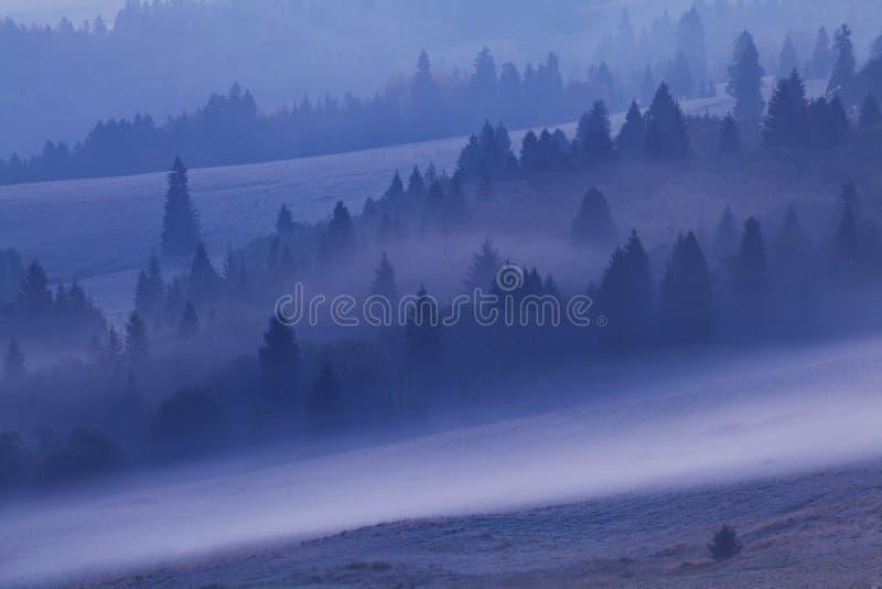 Изумляя взгляд с туманными деревьями на горизонте на восходе солнца выгон осени и лета Красивая естественная предпосылка, Альп, Е стоковое изображение rf