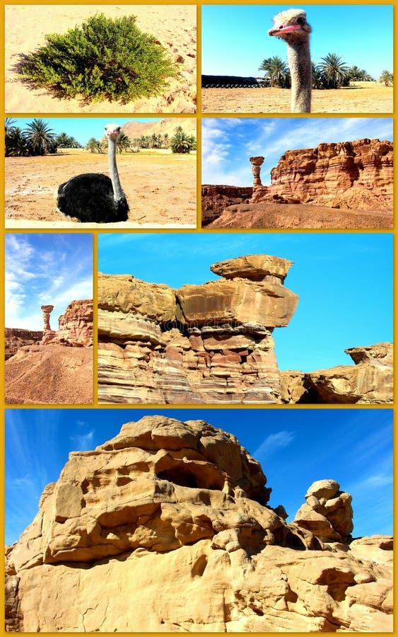Изумляя Египет. Пустыня коллажа. стоковое изображение