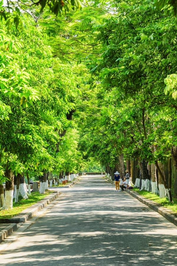 Изумляя зеленая тенистая улица на имперском городе, оттенок, Вьетнам стоковая фотография rf