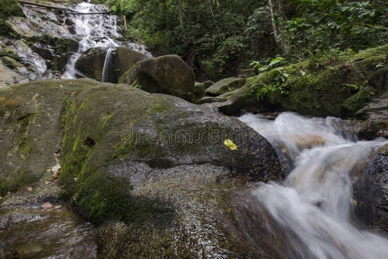 изумляя каскадируя тропический водопад влажный и мшистый утес, окруженный зеленым дождевым лесом стоковое фото rf