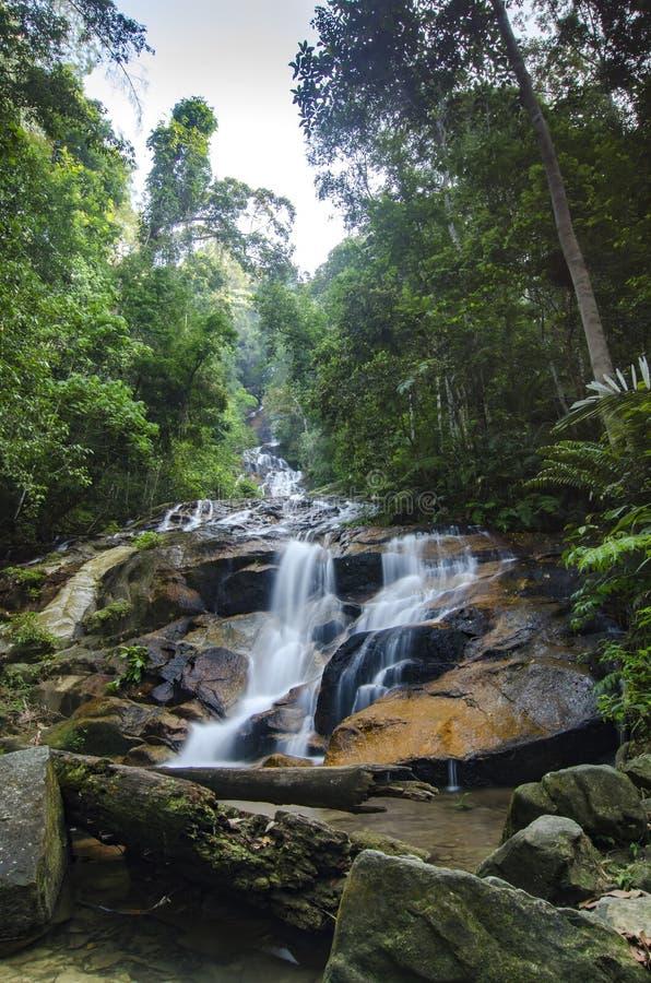 изумляя каскадируя тропический водопад влажный и мшистый утес, окруженный зеленым дождевым лесом стоковые фотографии rf
