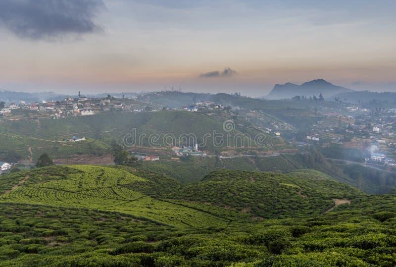 Изумляя плантации чая на холмах во время времени захода солнца стоковая фотография