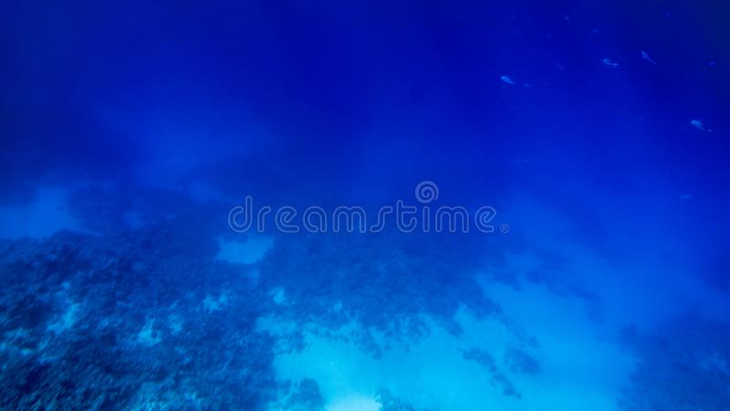 Изумляя подводное изображение дна Красного Моря Красочные рыбы коралла и растя риф под поверхностью воды стоковые фото