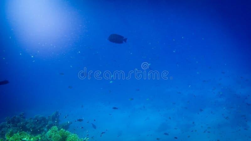 Изумляя подводное изображение дна Красного Моря Красочные рыбы коралла и растя риф под поверхностью воды стоковое изображение rf