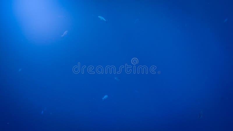 Изумляя подводное изображение солнца и световых лучей светя через поверхность воды глубины океана стоковое фото