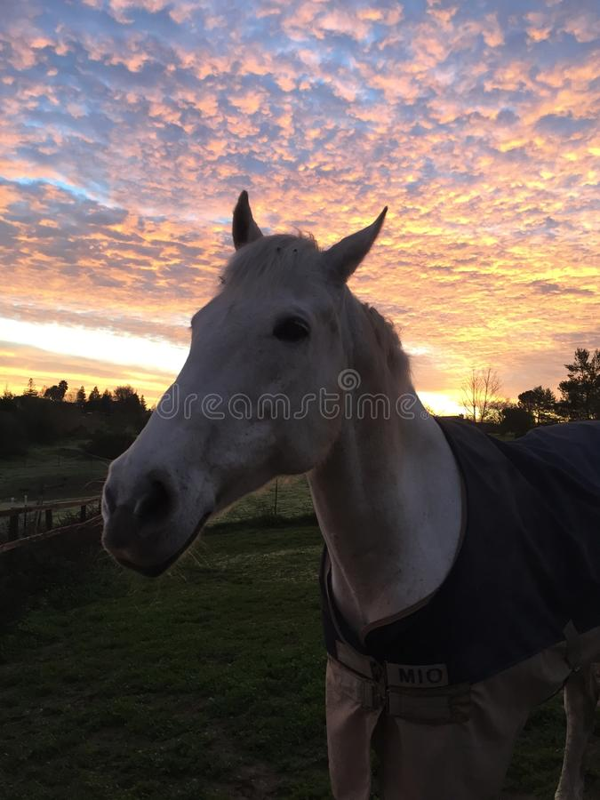 Изумляя розовый восход солнца неба с лошадью нося одеяло стоковая фотография rf