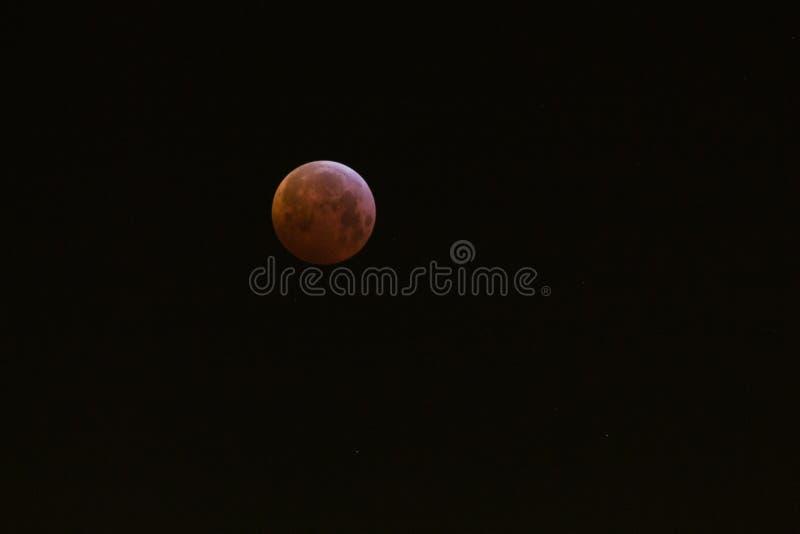 Изумляя супер луна волка крови стоковые фотографии rf