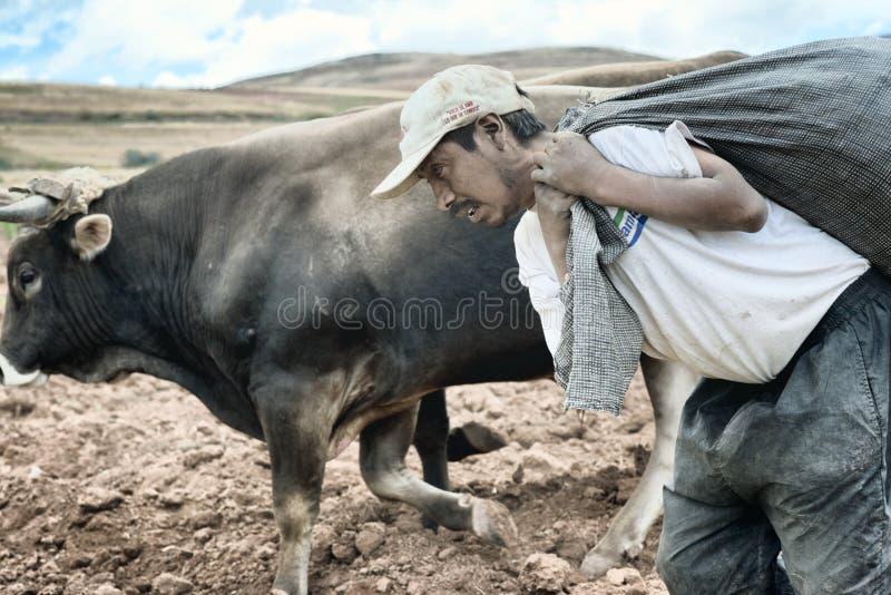 Издольщик нося большой мешок картошек для культивировать стоковое изображение rf