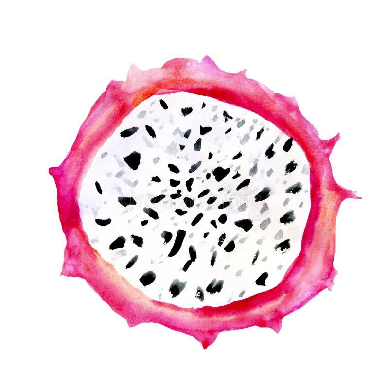Иллюстрации акварели руки вычерченные куска pitaya плодов дракона изолированного на белой предпосылке Pitahaya Еда лета стоковые изображения