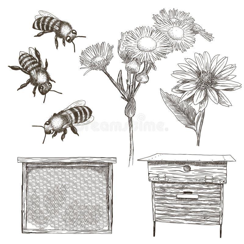 Иллюстрации вектора установили с пчелами, цветками, крапивницей и сотом бесплатная иллюстрация