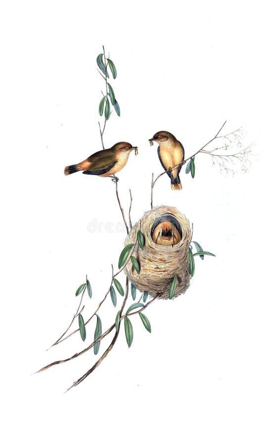 Иллюстрации животного иллюстрация штока
