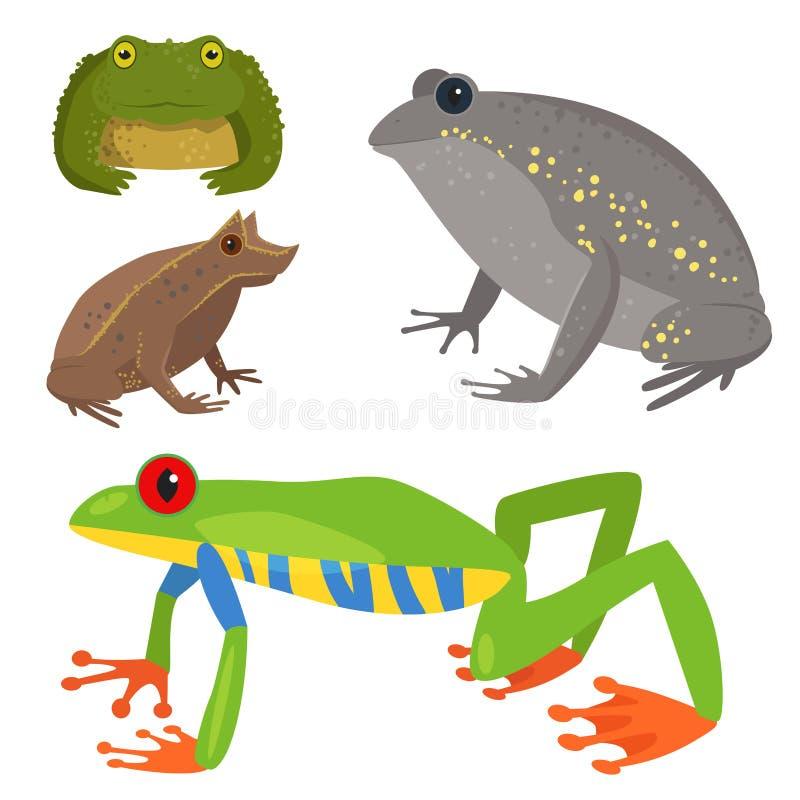 Иллюстрации природы froggy зеленого цвета животного живой природы мультфильма лягушки лодкамиамфибия жабы тропической смешной ток бесплатная иллюстрация