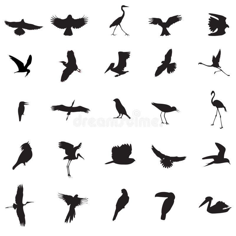 иллюстрации птицы
