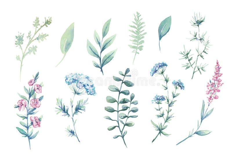 Иллюстрации цвета воды Ботаническая часть Набор зеленых листьев, трав и ветвей стоковое изображение