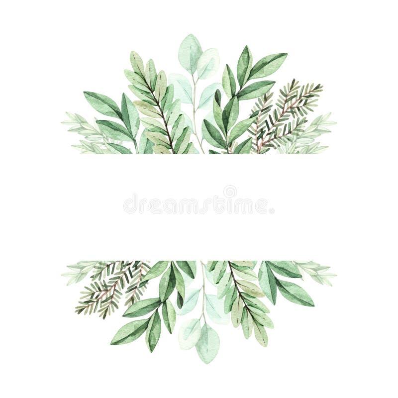 Иллюстрация акварели весны Ботаническая рамка с эвкалиптом, ветвями ели и листьями greenery Элементы флористического дизайна иллюстрация штока
