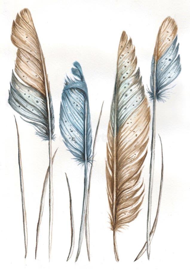 Иллюстрация акварели пер птицы иллюстрация штока
