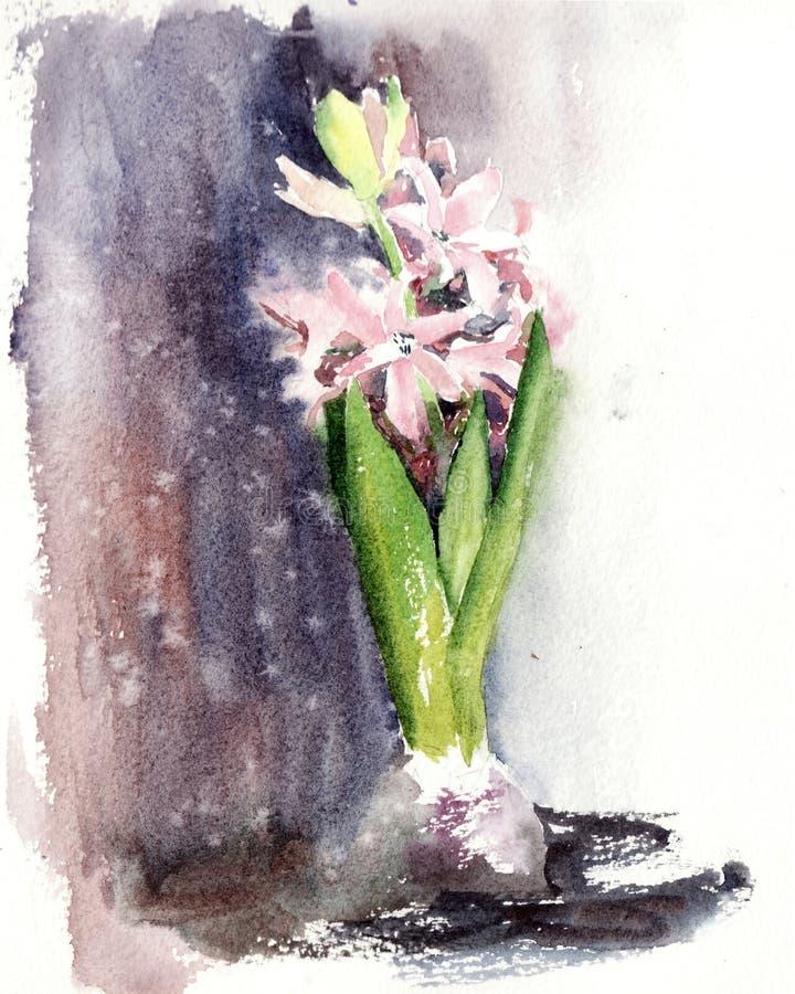Иллюстрация акварели розового яркого гиацинта иллюстрация штока