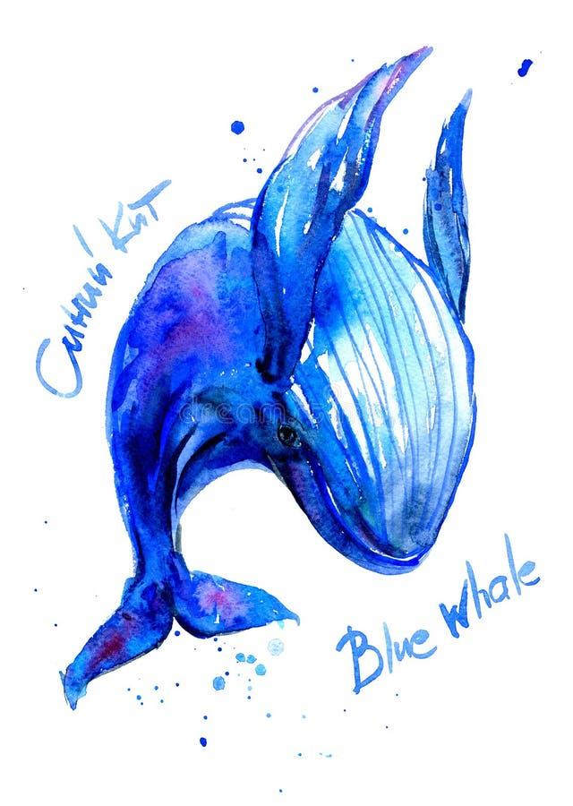 Иллюстрация акварели синего кита горба Подводная фауна имя на английском, русском стоковая фотография rf