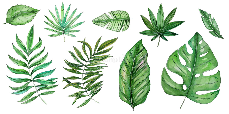 Иллюстрация акварели тропическая флористическая установила с зелеными листьями бесплатная иллюстрация