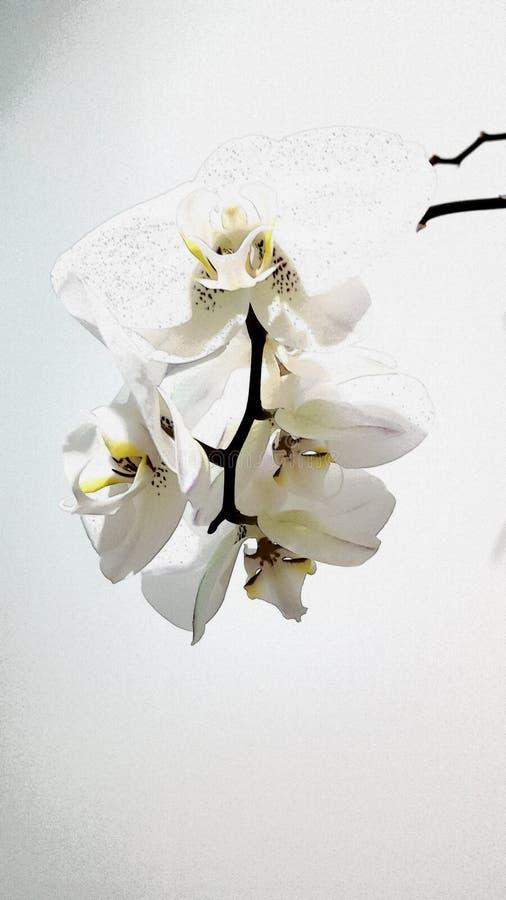 Иллюстрация белой орхидеи стоковое фото rf