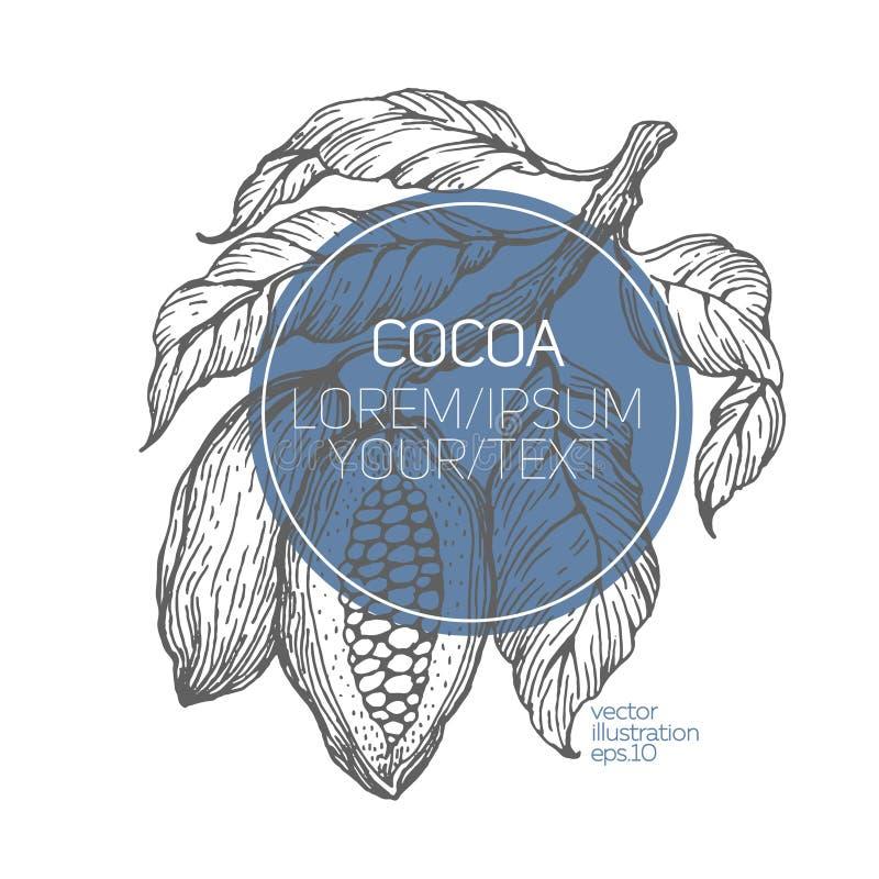 Иллюстрация вектора бобов кака Выгравированная винтажная иллюстрация стиля Бобы кака шоколада Шаблон логотипа иллюстрация вектора