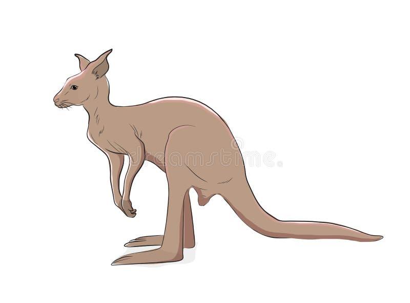 Иллюстрация вектора кенгуру иллюстрация штока