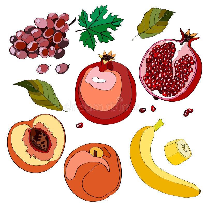 Иллюстрация вектора, комплект Виноградины, виноградины, виноградины, гранатовое дерево, вениса, половинное гранатовое дерево, гра бесплатная иллюстрация