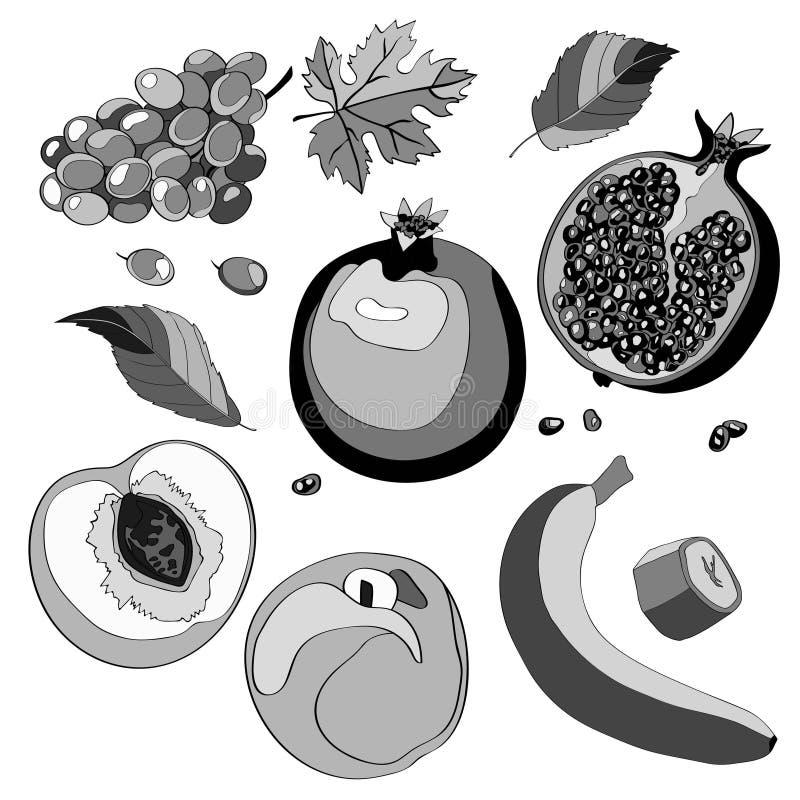 Иллюстрация вектора, комплект Виноградины, гранатовое дерево, вениса, половинное гранатовое дерево, персик, половинный персик, ли иллюстрация штока