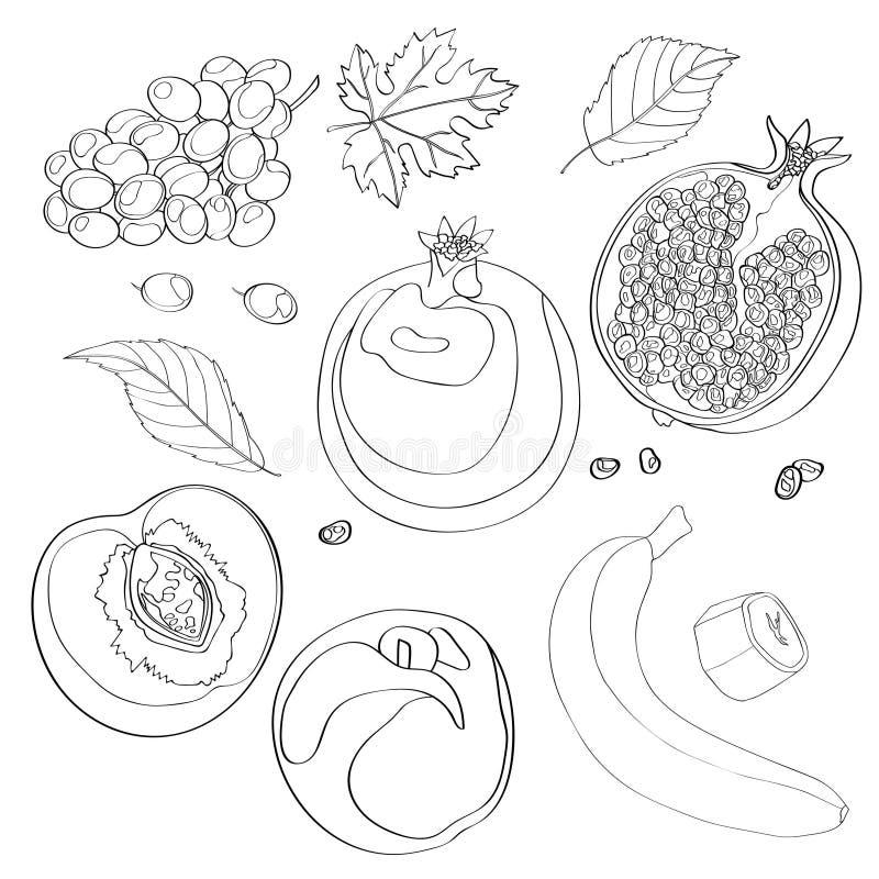 Иллюстрация вектора, комплект Виноградины, гранатовое дерево, половинное гранатовое дерево, персик, половинный персик, листья пер иллюстрация вектора