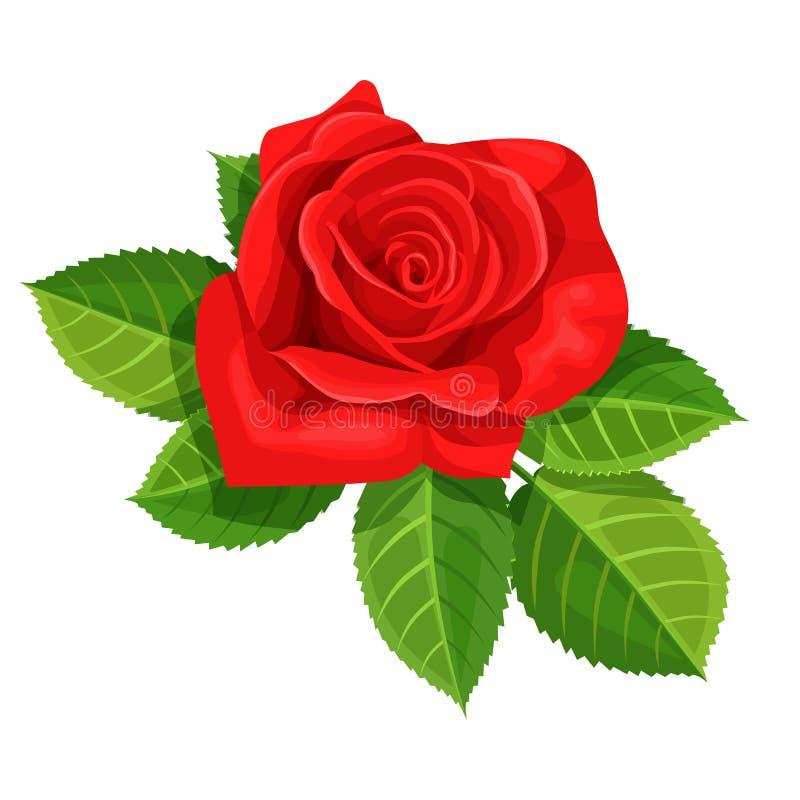 Иллюстрация вектора красной розы изолированная на белой предпосылке иллюстрация вектора