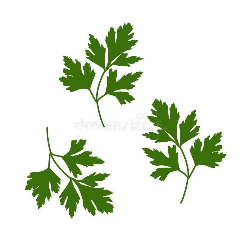 Иллюстрация вектора лист петрушки вектор Зелен-вещества иллюстрация штока