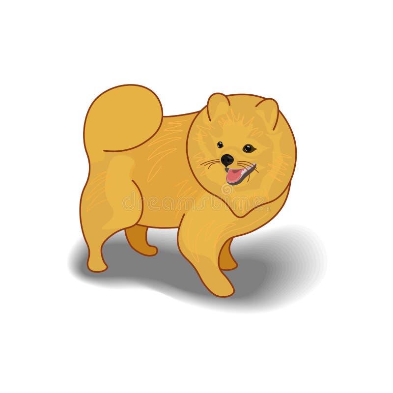 Иллюстрация вектора пушистой собаки изолированной на белой предпосылке Эта милая собака мультфильма выглядит как шпиц Pomeranian иллюстрация штока